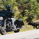 Os cães ladram e as motos passam