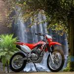 Honda CRF 250F 2019: a nova campeã das trilhas